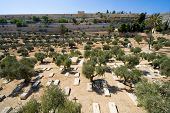 stock photo of gethsemane  - Christian cemetery in the Kidron valley on the foot of the mount of olives - JPG