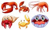 foto of aquatic animal  - Illustration of different sea animals - JPG