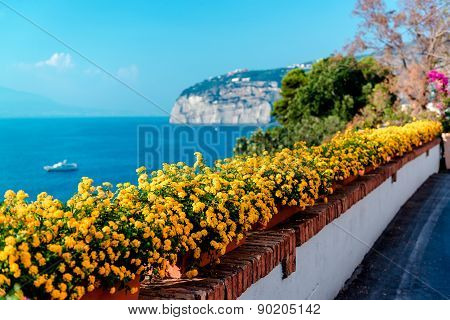 Flowers In Piano Di Sorrento. Amalfi Coast. Italy
