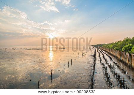 sunset at mangrove forest in Bangpu Thailand