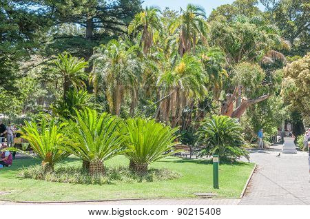 Cycads And Palm Trees In The Company Garden