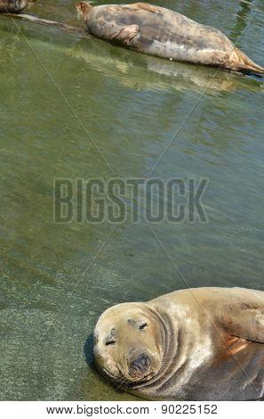 animal; aquatic; environment; fauna; fur; life; mammal; nature; nobody; one; resting; seal; sunny; water; wet; zoo; warsaw