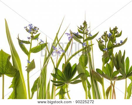 Flowers And Leaves On A White Background