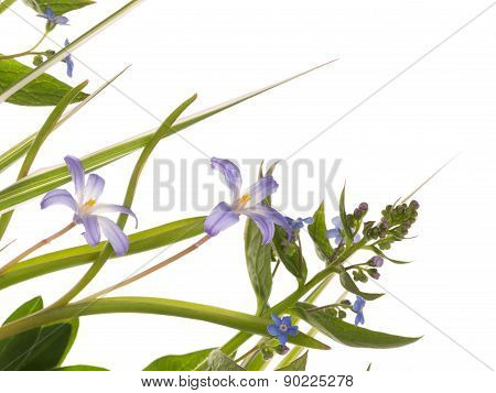Blue Delicate Flowers