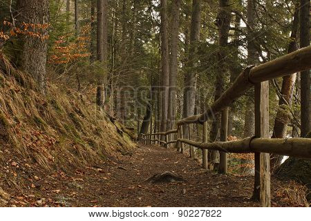 Path In Carpathian Mountains Forest