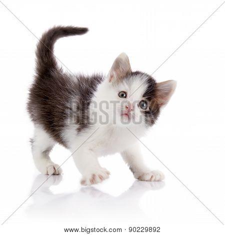 The Surprised Spotty Domestic Kitten.