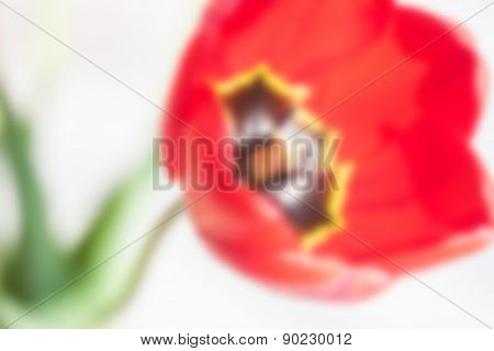 blurred red tulip background