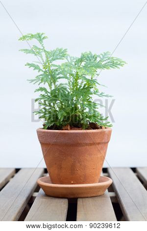 Small plant in pot on wooden table