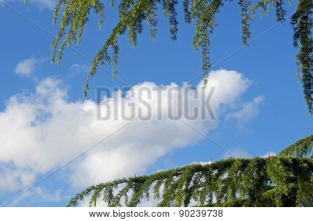 blue sky and tree