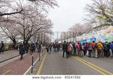 Unidentified People Walking In Yeouido Spring Flower Festival