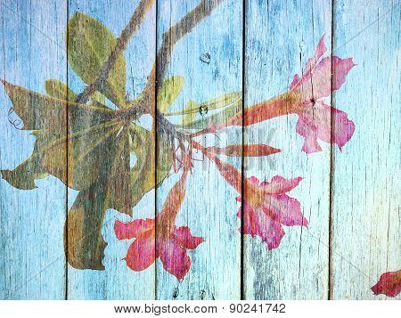 Desert Rose Flower On Wood Texture