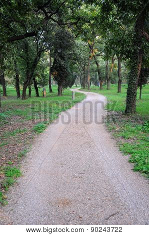 Winding Path in Cemetery