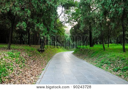 Stone paved pathway in cemetery