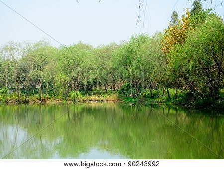 Pond in Wetland Area of Hangzhou China