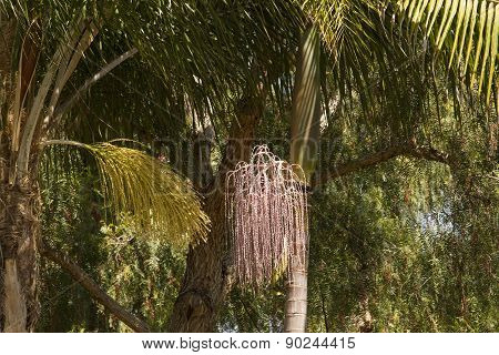 Queen And King Palms
