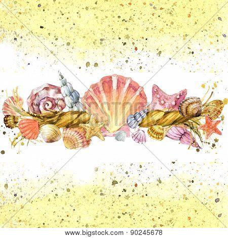 Seashell watercolor illustration
