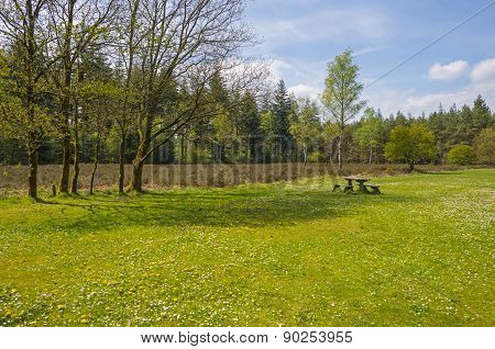 Clearing with flowers in a pine forest in spring
