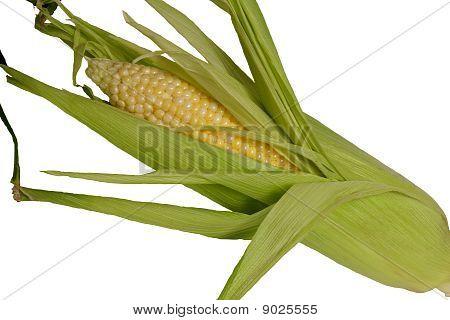 Shucked Corn on the Cob