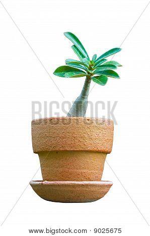 islate Chuan Chom plant