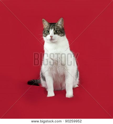 Tabby And White Cat Sitting On Red