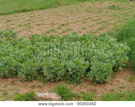 Fresh vegetables in a kitchen garden