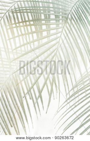 palm leaves - background