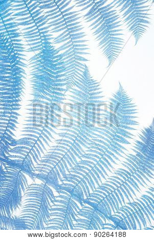 colorful blue palm leaves
