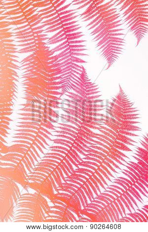 colorful pink palm leaves