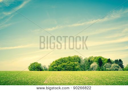 Field Landscape With Trees