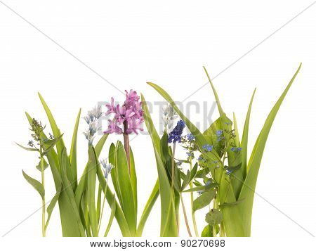Bright Spring Flowers And Leaves