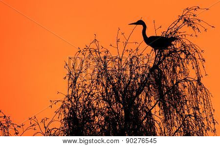 Heron In A Tree