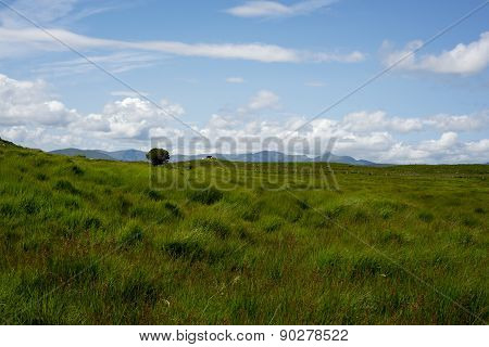 Cattle And Green Landscape