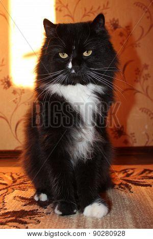Black Cat Sitting On The Carpet