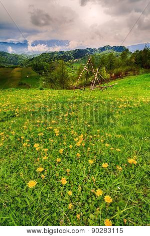 Mountain Flower Meadow With Mountain In Background