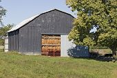 image of tobacco barn  - tobacco leaves hanging in a barn to dry - JPG
