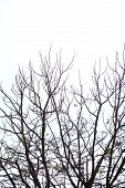 picture of drought  - Trees dry winter of Thailand is have the drought - JPG