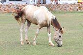 stock photo of horses eating  - white - JPG