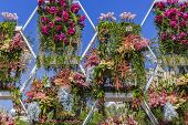 image of flower pot  - Pots of flowers on holiday flowers in Baku - JPG