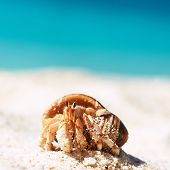 stock photo of hermit crab  - Hermit crab on beach at Seychelles - JPG