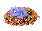 foto of flax plant  - Flax seeds with flowers close up on white - JPG