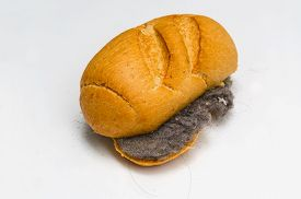 picture of dust mite  - Sandwich made with bread and house dust and hair - JPG