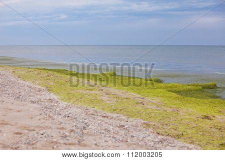green seaside