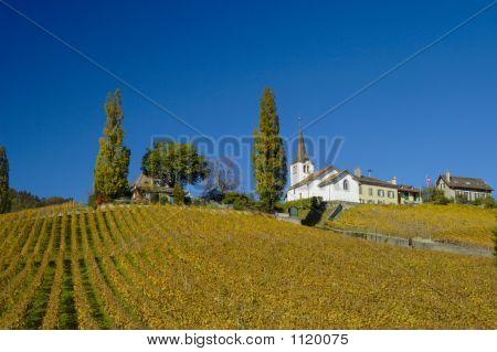 Village In The Vineyards