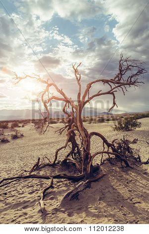 Dead Tree in Death Valley Desert