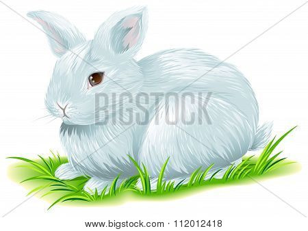 White easter bunny sitting on green grass
