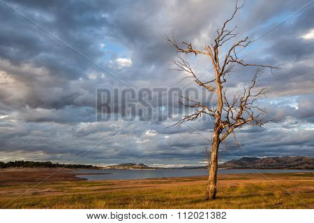 Bare Tree Standing On The Shore Of Hume Lake