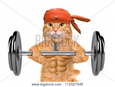 Fitness cat lifting a heavy big dumbbell.