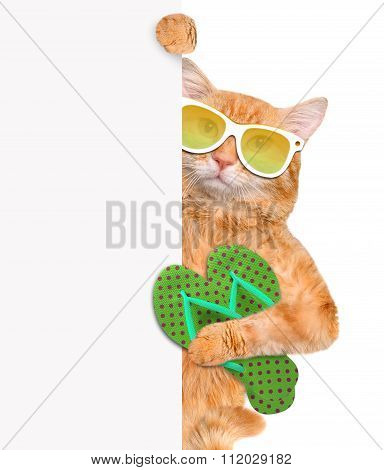 Cat with thongs. Isolated on white.