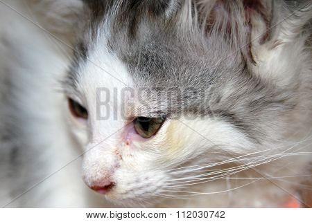 Portrait Of A Sweet White Kitty With Black Spots, Pink Nose And Long Whiskers And Green Eyes