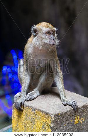 Monkey In Ramayana Cave In Batu Caves Complex,  Malaysia